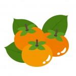 柿の美容の効果とは?5つの成分をしっかりチェック!