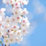 春が嫌いな理由まとめ!あなたが共感できるものとは?