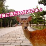 奈良で一人旅のおすすめポイント!30人の経験者に聞いてみた